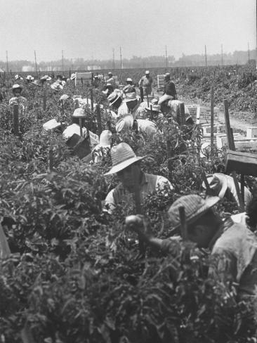 True Stories from the Bracero Era: Part I – California Labor