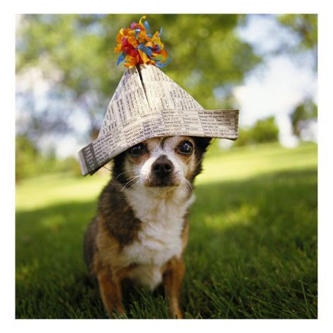small-dog-with-newspaper-hat.jpg