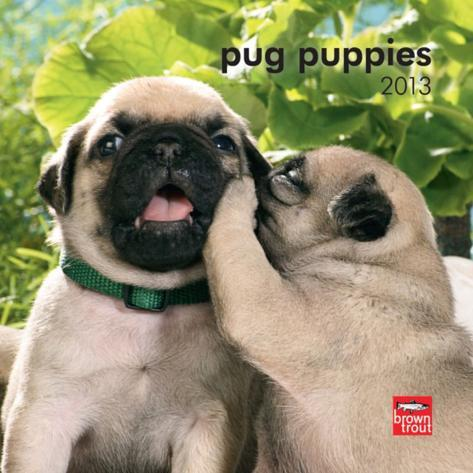 words that rhyme with pug tuesday tidbit my calendar habit trying to be fearless 2640