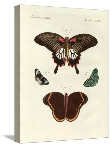 Beautiful Foreign Butterflies Bedruckte aufgespannte Leinwand