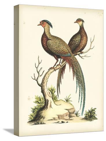 Regal Pheasants II Bedruckte aufgespannte Leinwand