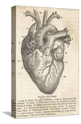Anatomía del corazón Reproducción de lámina sobre lienzo en ...