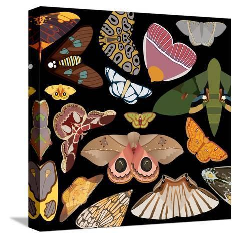 Moths Pachanga, Moths Mix Stretched Canvas Print