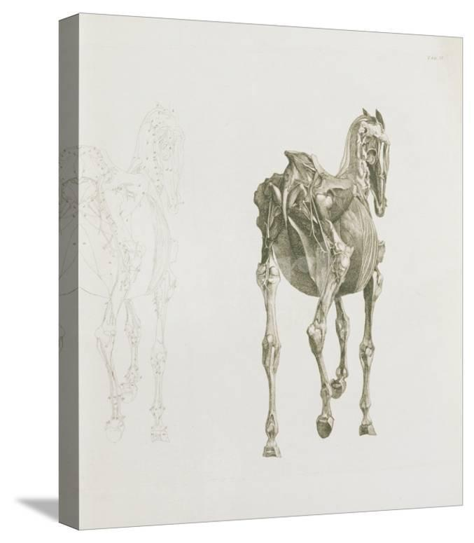 Tab Xv From The Anatomy Of The Horse 1766 Engraving Giclee