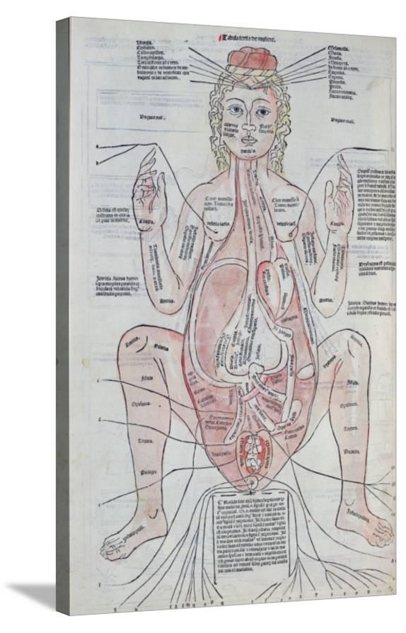 The Anatomy Of The Pregnant Woman Illustration From Fasciculus
