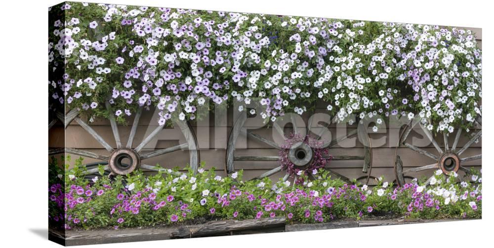 Usa Alaska Chena Hot Springs Flowers And Wagon Wheels