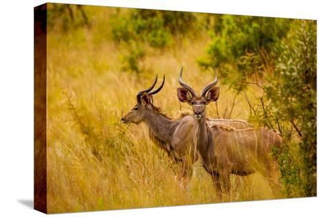 wild african deer, at kruger national park, johannesburg, southwild african deer, at kruger national park, johannesburg, south africa, africa photographic print by laura grier at allposters com