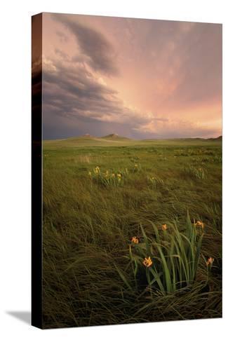 Wild Iris Flowers Grow in Long Prairie Grass Pingotettu canvasvedos