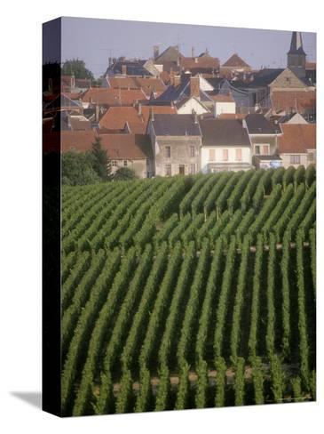 Vineyards in the Champagne Region, France Pingotettu canvasvedos