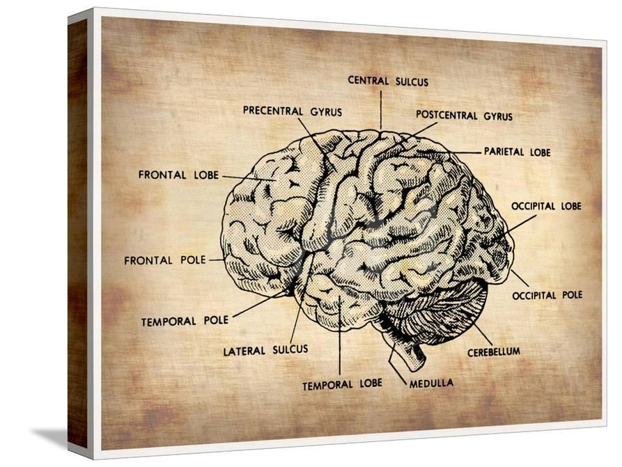 Subway Map Of The Brain.Vintage Brain Map Anatomy