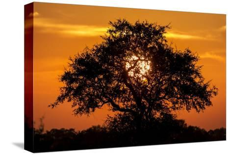 sunset and acacia tree, kruger national park, south africasunset and acacia tree, kruger national park, south africa photographic print by paul souders at allposters com