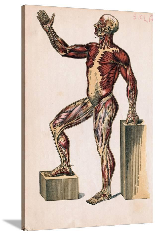 profile of medical diagram on man's body' giclee print - | allposters.com  allposters.com