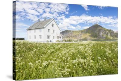 Field of blooming flowers frame the typical wooden house surrounded by  peaks and blue sea, Flakstad