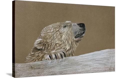 Rusty g bear