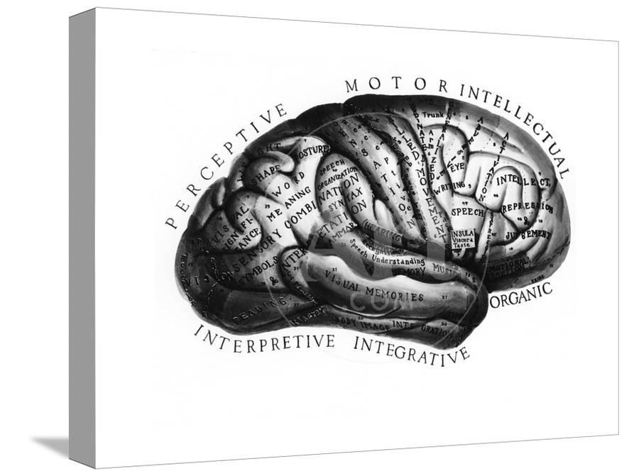 Diagram of Brain Functions Giclee Print by Science Source at ...