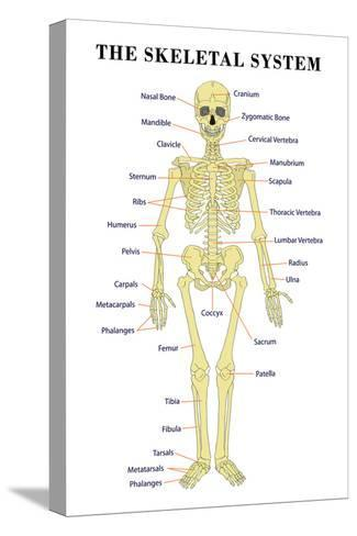 The Skeletal System Anatomical Chart Scientific Poster Print Print ...