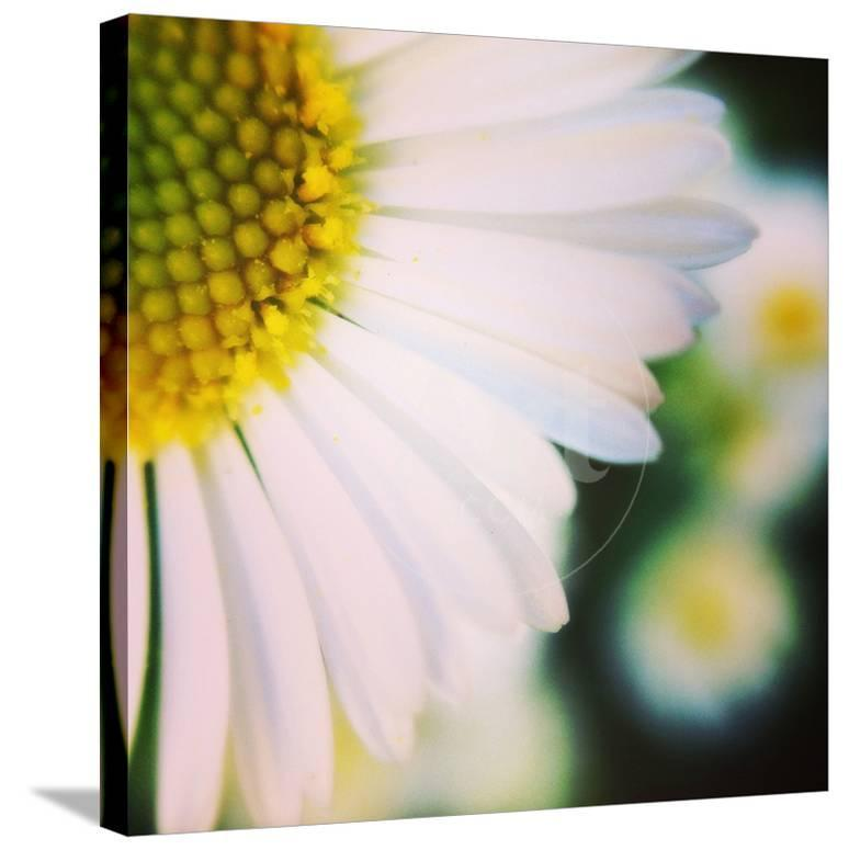 Flower song photographic print by vincent james at allposters mightylinksfo