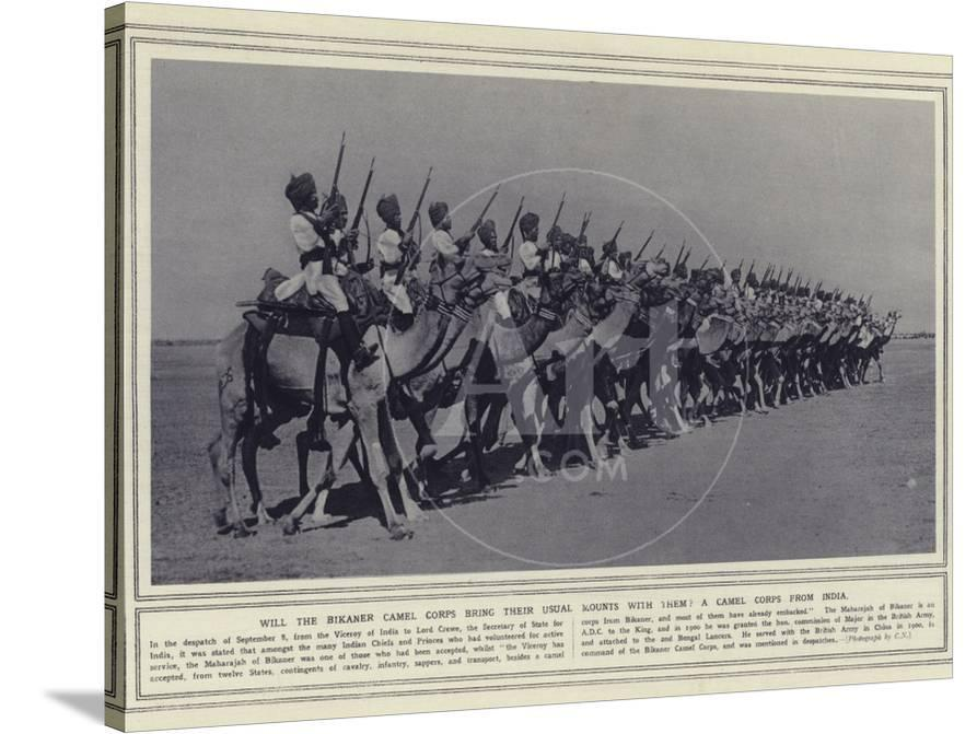 Will the Bikaner Camel Corps Bring their Usual Mounts with Them a Camel  Corps from India' Photographic Print | AllPosters.com