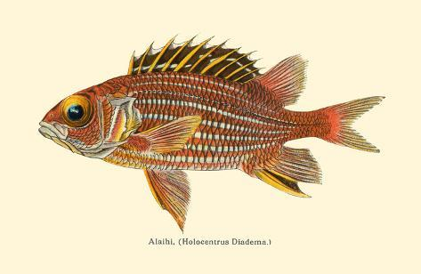 Alaihi (Holocentrus Diadema) - Hawaiian Squirrel Fish - from Fishes of  Hawaii