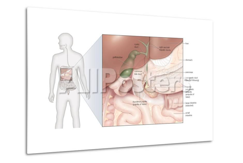 Bony Framework Of Head And Neck Skeletal System Human Anatomy