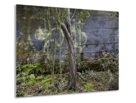 Tree and Graffiti Wall (Oakland, CA) Metallivedokset
