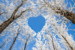 Winter Landscape,Branches Form a Heart-Shaped Pattern by 06photo