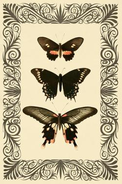 Vintage Butterfly Trio by 14.0