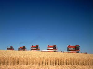 1970s Five Massey Ferguson Combines Harvesting Wheat Nebraska