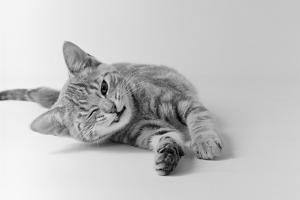 1970s Head on View of Young Striped Cat Stretching Out on Floor One Eye Closed Indoor