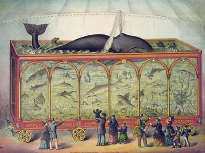 19th Century Circus Aquarium, 1873