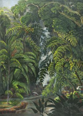 Jungle Cascade by 19th Century English School
