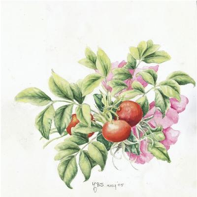 https://imgc.allpostersimages.com/img/posters/2007-rose-hips_u-L-Q1CAW2M0.jpg?artPerspective=n