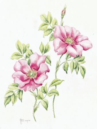 https://imgc.allpostersimages.com/img/posters/2007-wild-roses_u-L-Q1CAXLQ0.jpg?artPerspective=n