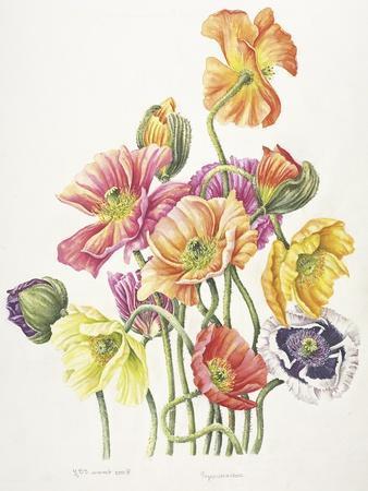 https://imgc.allpostersimages.com/img/posters/2010-poppy-bouquet_u-L-Q1CA9970.jpg?artPerspective=n