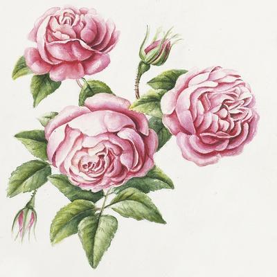 https://imgc.allpostersimages.com/img/posters/3-roses_u-L-Q1CAVUW0.jpg?artPerspective=n