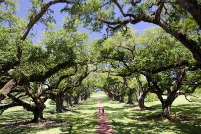 https://imgc.allpostersimages.com/img/posters/300-year-old-oak-trees-vacherie-new-orleans-louisiana-usa_u-L-PN70OM0.jpg?p=0