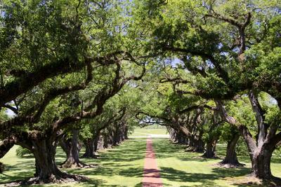https://imgc.allpostersimages.com/img/posters/300-year-old-oak-trees-vacherie-new-orleans-louisiana-usa_u-L-PN70PG0.jpg?artPerspective=n