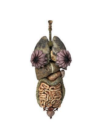 https://imgc.allpostersimages.com/img/posters/3d-rendering-of-unhealthy-female-internal-organs_u-L-PN8WR60.jpg?p=0