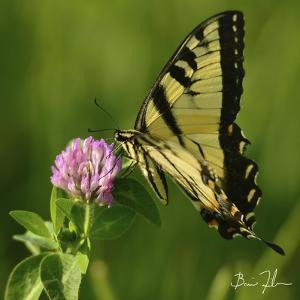 Butterfly by 5fishcreative
