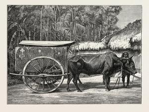 A Bullock Carriage in Cochin-China