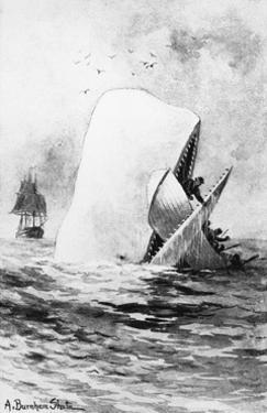 Illustration of the White Whale by A. Burnham Shute
