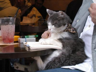 A Cat Joins its Owner Reading a Book at a Tokyo Cafe