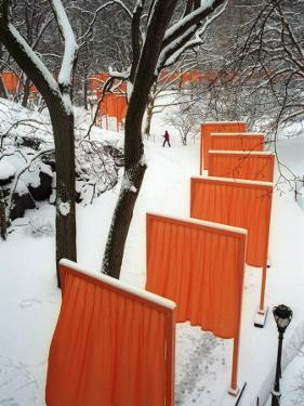 A Cross Country Skier Slides Through a Section of the Gates