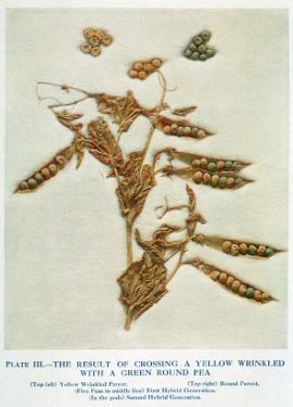 Gregor Johann Mendel Austrian Botanist by A.d. Darleishire