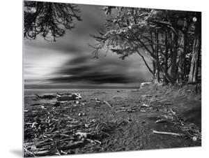 Driftwood on the Beach, Santa Cruz, California by A.D.