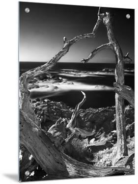 Looking Through a Dead Tree at the Pacific Ocean by A.D.