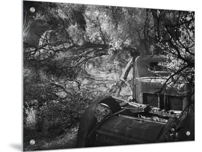 Old Car in Trees, Joshua Tree National Park, California