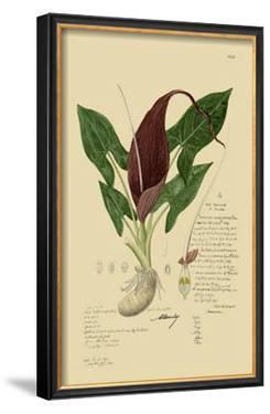 Aroid Plant IV by A. Descubes