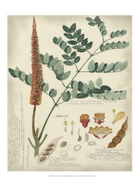 Botanical II by A. Descubes