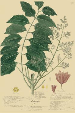 Descubes Tropical Botanical III by A. Descubes